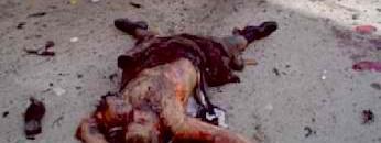 barbaric islam