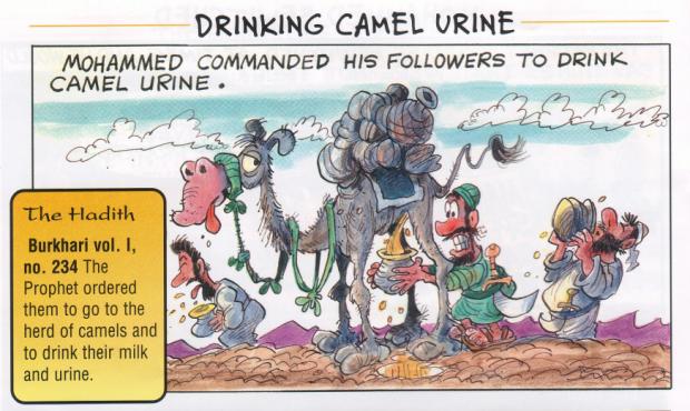 Résultats de recherche d'images pour «camel urin»