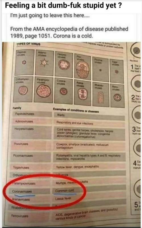 corona virus fact